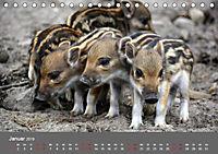 Die lieben Kleinen ... Tierkinder einfach zum Knuddeln (Tischkalender 2019 DIN A5 quer) - Produktdetailbild 4