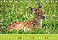 Die lieben Kleinen ... Tierkinder einfach zum Knuddeln (Tischkalender 2019 DIN A5 quer) - Produktdetailbild 7