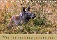 Die lieben Kleinen ... Tierkinder einfach zum Knuddeln (Tischkalender 2019 DIN A5 quer) - Produktdetailbild 11