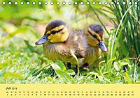 Die lieben Kleinen ... Tierkinder einfach zum Knuddeln (Tischkalender 2019 DIN A5 quer) - Produktdetailbild 13