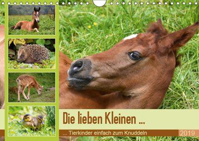 Die lieben Kleinen ... Tierkinder einfach zum Knuddeln (Wandkalender 2019 DIN A4 quer), GUGIGEI