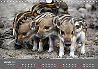Die lieben Kleinen ... Tierkinder einfach zum Knuddeln (Wandkalender 2019 DIN A4 quer) - Produktdetailbild 1