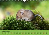 Die lieben Kleinen ... Tierkinder einfach zum Knuddeln (Wandkalender 2019 DIN A4 quer) - Produktdetailbild 9