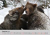 Die lieben Kleinen ... Tierkinder einfach zum Knuddeln (Wandkalender 2019 DIN A4 quer) - Produktdetailbild 12