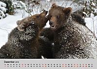 Die lieben Kleinen ... Tierkinder einfach zum Knuddeln (Wandkalender 2019 DIN A2 quer) - Produktdetailbild 12