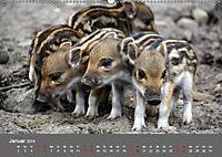Die lieben Kleinen ... Tierkinder einfach zum Knuddeln (Wandkalender 2019 DIN A2 quer) - Produktdetailbild 1