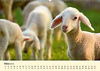 Die lieben Kleinen ... Tierkinder einfach zum Knuddeln (Wandkalender 2019 DIN A2 quer) - Produktdetailbild 3