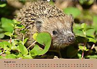 Die lieben Kleinen ... Tierkinder einfach zum Knuddeln (Wandkalender 2019 DIN A2 quer) - Produktdetailbild 8