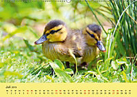 Die lieben Kleinen ... Tierkinder einfach zum Knuddeln (Wandkalender 2019 DIN A2 quer) - Produktdetailbild 7