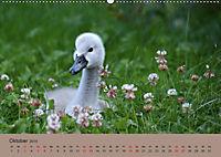 Die lieben Kleinen ... Tierkinder einfach zum Knuddeln (Wandkalender 2019 DIN A2 quer) - Produktdetailbild 10