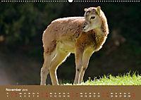 Die lieben Kleinen ... Tierkinder einfach zum Knuddeln (Wandkalender 2019 DIN A2 quer) - Produktdetailbild 11