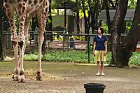Die Nacht der Giraffe - Produktdetailbild 2