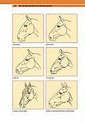 Die Persönlichkeit Ihres Pferdes - Produktdetailbild 5