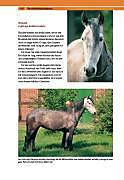 Die Persönlichkeit Ihres Pferdes - Produktdetailbild 7