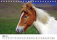 Die Pferde Islands (Tischkalender 2019 DIN A5 quer) - Produktdetailbild 4