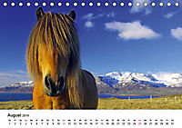 Die Pferde Islands (Tischkalender 2019 DIN A5 quer) - Produktdetailbild 8