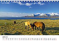 Die Pferde Islands (Tischkalender 2019 DIN A5 quer) - Produktdetailbild 6