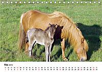 Die Pferde Islands (Tischkalender 2019 DIN A5 quer) - Produktdetailbild 5
