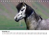 Die Pferde Islands (Tischkalender 2019 DIN A5 quer) - Produktdetailbild 11
