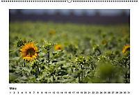 Die Provence zur Lavendelblüte (Wandkalender immerwährend DIN A2 quer) - Produktdetailbild 3