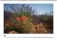 Die Provence zur Lavendelblüte (Wandkalender immerwährend DIN A2 quer) - Produktdetailbild 5
