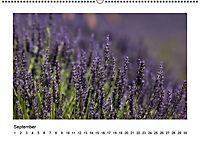 Die Provence zur Lavendelblüte (Wandkalender immerwährend DIN A2 quer) - Produktdetailbild 9