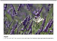 Die Provence zur Lavendelblüte (Wandkalender immerwährend DIN A2 quer) - Produktdetailbild 8