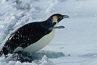 Die Reise der Pinguine - Produktdetailbild 8