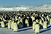 Die Reise der Pinguine - Produktdetailbild 7
