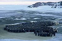 Die Reise der Pinguine - Produktdetailbild 2