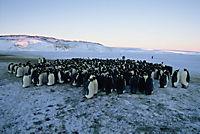 Die Reise der Pinguine - Special Edition - Produktdetailbild 10