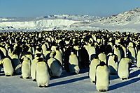 Die Reise der Pinguine - Special Edition - Produktdetailbild 7