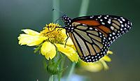 Die Reise des Schmetterlings - Produktdetailbild 1