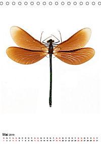 Die schönsten Insekten (Tischkalender 2019 DIN A5 hoch) - Produktdetailbild 5