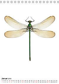 Die schönsten Insekten (Tischkalender 2019 DIN A5 hoch) - Produktdetailbild 1