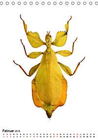 Die schönsten Insekten (Tischkalender 2019 DIN A5 hoch) - Produktdetailbild 2