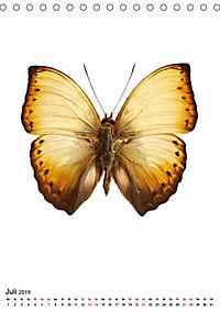 Die schönsten Insekten (Tischkalender 2019 DIN A5 hoch) - Produktdetailbild 7