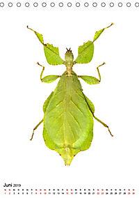 Die schönsten Insekten (Tischkalender 2019 DIN A5 hoch) - Produktdetailbild 6