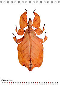 Die schönsten Insekten (Tischkalender 2019 DIN A5 hoch) - Produktdetailbild 10