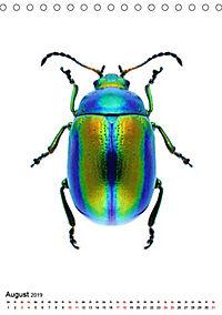 Die schönsten Insekten (Tischkalender 2019 DIN A5 hoch) - Produktdetailbild 8