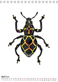 Die schönsten Insekten (Tischkalender 2019 DIN A5 hoch) - Produktdetailbild 4
