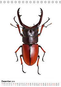 Die schönsten Insekten (Tischkalender 2019 DIN A5 hoch) - Produktdetailbild 12