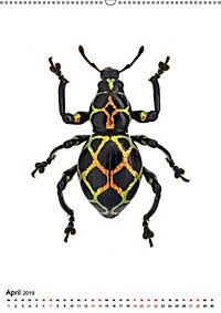 Die schönsten Insekten (Wandkalender 2019 DIN A2 hoch) - Produktdetailbild 4