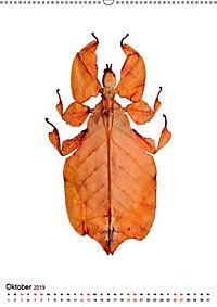 Die schönsten Insekten (Wandkalender 2019 DIN A2 hoch) - Produktdetailbild 10