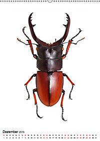 Die schönsten Insekten (Wandkalender 2019 DIN A2 hoch) - Produktdetailbild 12