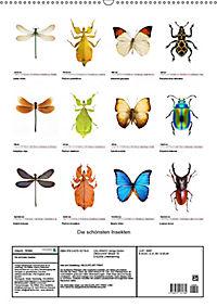 Die schönsten Insekten (Wandkalender 2019 DIN A2 hoch) - Produktdetailbild 13