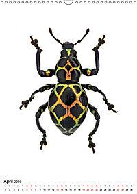 Die schönsten Insekten (Wandkalender 2019 DIN A3 hoch) - Produktdetailbild 4