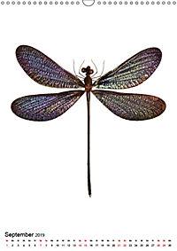 Die schönsten Insekten (Wandkalender 2019 DIN A3 hoch) - Produktdetailbild 9