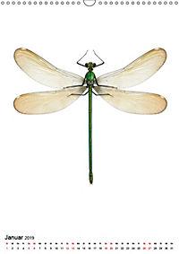 Die schönsten Insekten (Wandkalender 2019 DIN A3 hoch) - Produktdetailbild 1