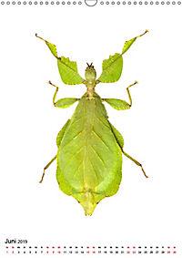 Die schönsten Insekten (Wandkalender 2019 DIN A3 hoch) - Produktdetailbild 6
